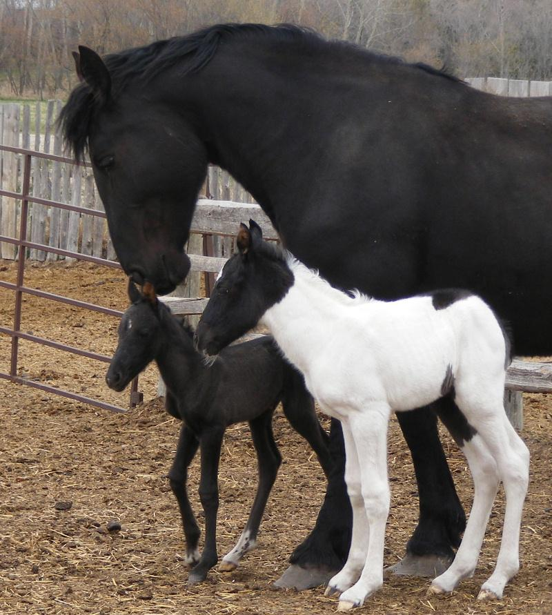 Twin Foals born at Twin Valley Ranch
